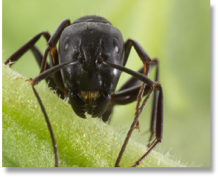 NH Suburban Wildlife Control to work closely for all of your pest insect issues, including carpenter ant control