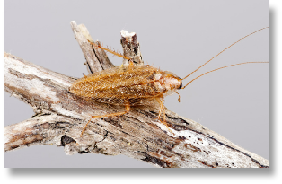 NH Suburban Wildlife Control can help you with all of your insect problems including cockroaches and fleas.